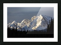 Snow covered mountains with early morning light, silhouetted forest in the foreground, blue sky and clouds; Kananaskis Country, Alberta, Canada Picture Frame print