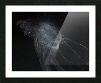 Glowing grey jellyfish in the dark water Picture Frame print