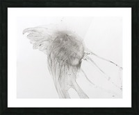 Jellyfish against a white background Impression et Cadre photo
