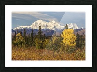 Denali, viewed from south of Cantwell, from the Parks Highway in Interior Alaska; Alaska, United States of America Picture Frame print