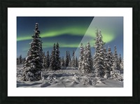 Green Aurora Borealis dances over the tops of snow covered black spruce trees, moonlight casting shadows on a clear winter night, interior Alaska; Gakona, Alaska, United States of America Picture Frame print