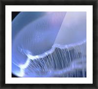 Underwater View Of A Moon Jellyfish, British Columbia, Canada Impression et Cadre photo