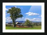 Beef cows rest in the shade of the barn roof under a blue sky with fluffy white clouds in the summer in the North Okanogan; British Columbia, Canada Picture Frame print