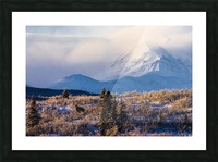 A moose (alces alces) forages on a winter morning with the Alaska Range in the background partially enshrouded in clouds; Alaska, United States of America Picture Frame print