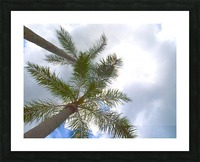 HDR Palm trees looking up against a cloudy sky Picture Frame print
