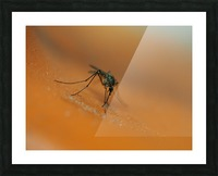 Mosquito! Picture Frame print
