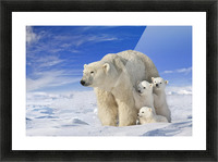 View Of Polar Bear Sow (Ursus Maritimus) With Her Triplet Cubs On The Wind Swept Plains Of Wapusk National Park, Manitoba, Canada, Winter, Composite Picture Frame print