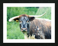 Horns Picture Frame print