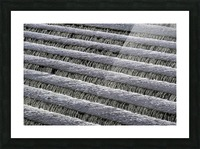 Weir steps Picture Frame print