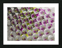 FLOWERS REFRACTION 8 Picture Frame print