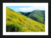 yellow poppy flower field with green leaf and green mountain and cloudy blue sky in summer Picture Frame print