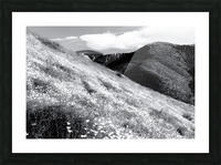 poppy flower field with mountain and cloudy sky background in black and white Picture Frame print