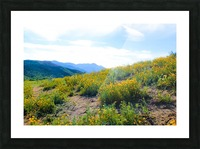 yellow poppy flower field with green leaf and blue cloudy sky in summer Picture Frame print