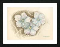 Linum Narbonense Picture Frame print