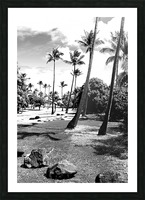 palm tree with cloudy sky in black and white Picture Frame print