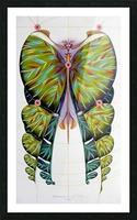 Fibonacci butterfly Picture Frame print