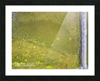 Fish Pond Algae Picture Frame print