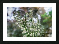 Thrush Flowers Picture Frame print