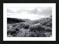 poppy flower field with mountain and cloudy sky in black and white Picture Frame print