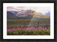View Of The Chugach Mountains With Fireweed In The Foreground Along The Glenn Highway, Southcentral Alaska, Summer, Hdr Picture Frame print