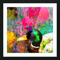 mallard duck with pink green brown purple yellow painting abstract background Picture Frame print