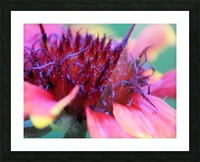 Sun Flower Macro Picture Frame print