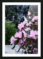 Flowers and Falls Picture Frame print