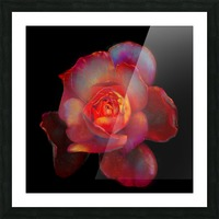 Gilded Rose Picture Frame print