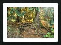 Roots  Picture Frame print