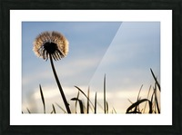 Dandelion Impression et Cadre photo