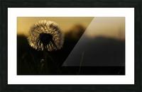 Dandelion Picture Frame print