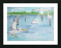 Pelicans in a coastal inlet. Picture Frame print