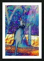 Kangaroo kickboxing a sack. Picture Frame print