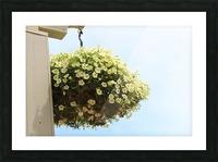Flower in South Dakota Picture Frame print