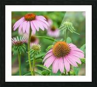 Springtime Once More Impression et Cadre photo