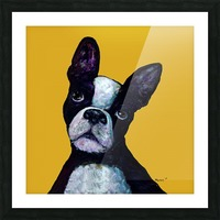 BOSTON TERRIER ON YELLOW Picture Frame print