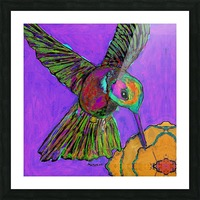HUMMINGBIRD ON PURPLE Picture Frame print