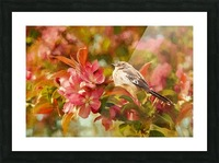 Sparrow In The Apple Tree Picture Frame print
