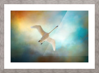 Swan Wings Picture Frame print