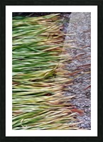 Cut Grass and Pebbles Picture Frame print
