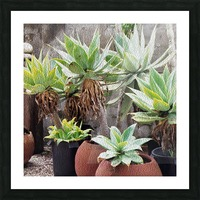 Potted Agave Plant Picture Frame print