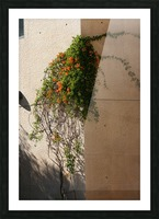 Wall Vines on Edge Picture Frame print