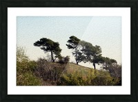 Natural Wind Blown Trees Picture Frame print