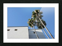 3 Palm Trees Next to Building Picture Frame print