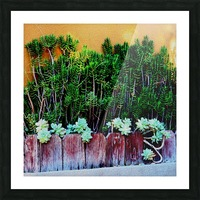 Wall of Succulents Picture Frame print