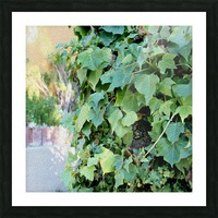 Green Ivy Picture Frame print