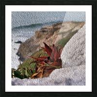 Coastal Red Aloe Vera  Picture Frame print