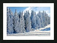 Snow  Crusted Trees Rocky Mountains Picture Frame print