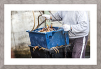 Snowcrab Picture Frame print
