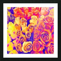 bouquet of roses texture pattern abstract in pink and white Picture Frame print